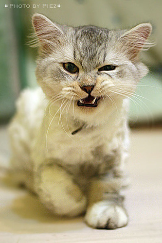 Don't like angry faces? We have oxytocin for that ...